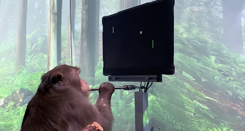neuralink monkey